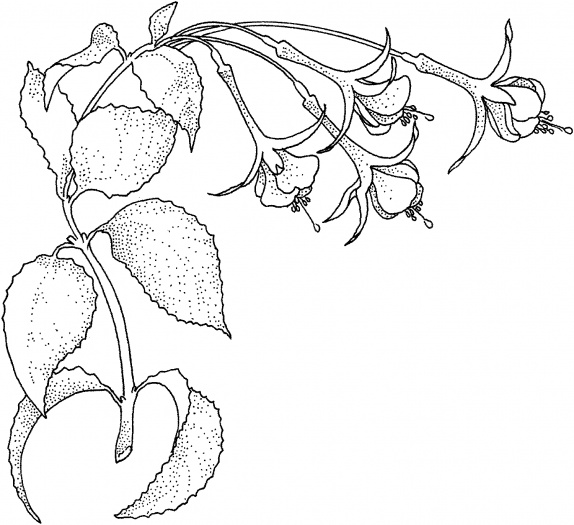 Fuchsia Coloring Page For Kids: Rainforest Flowers Coloring Pages