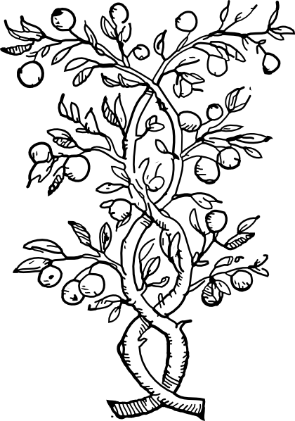 Rainforest Plants Coloring Pages Color On Pages Coloring Pages For Kids